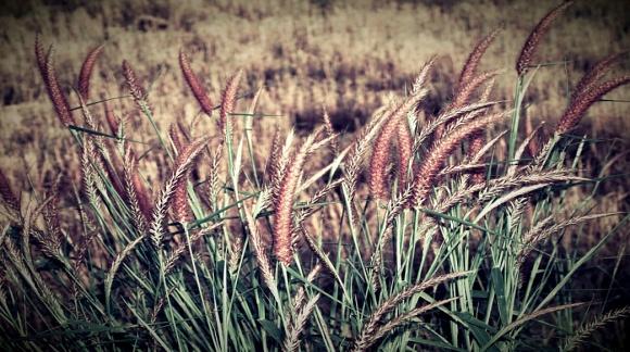 Vodič za donositelje i donositeljice odluka: Glas poduzetnica iz ruralnih područja